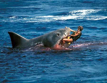 Second+Australia+shark+attack+02.jpg