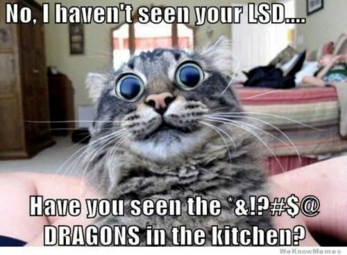 no-i-havent-seen-your-lsd-have-you-seen-the-dragons-in-the-kitchen-funny-cat-memes.jpg