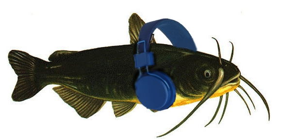 Catfish_wearing_headphones.jpg