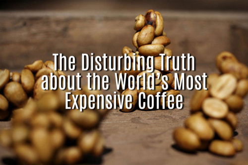 The-Disturbing-Truth-about-the-World%u2019s-Most-Expensive-Coffee.png
