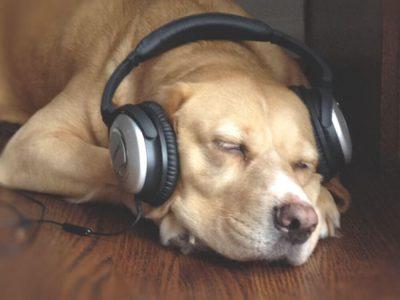 dog-listening-music-ft-400x300.jpg