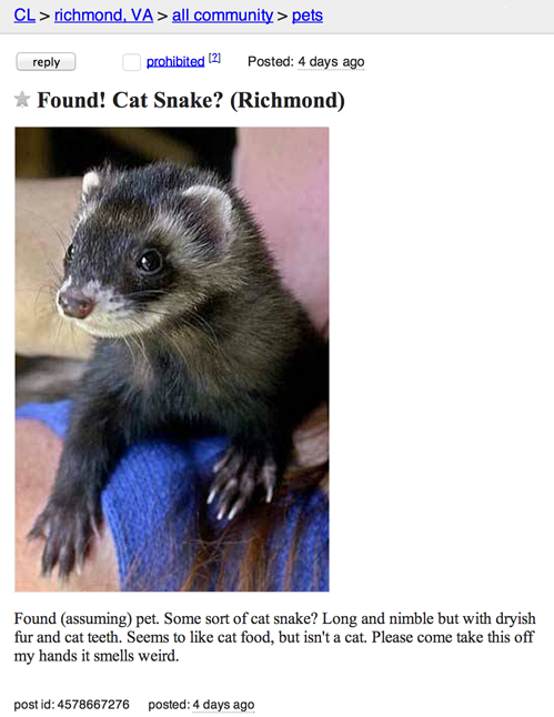 Cat+snake+ad_0802d1_5232030.png