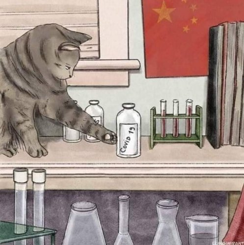 cat_Covid-19.jpg