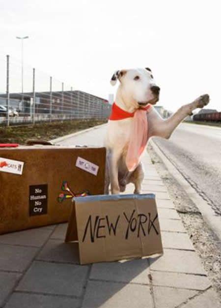 Dog Hitchhiking.jpg