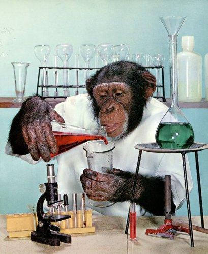 monkeyscientist.jpg