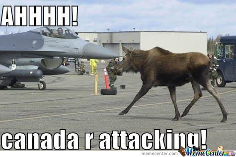 meme-canada-moose.jpeg