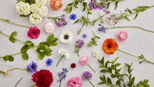 British-Flower-1x1-2-660x371.jpg
