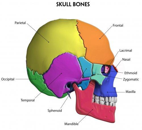 BONE_Skull.jpg