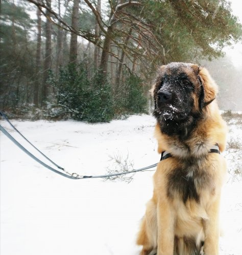 Barnie snow.JPG
