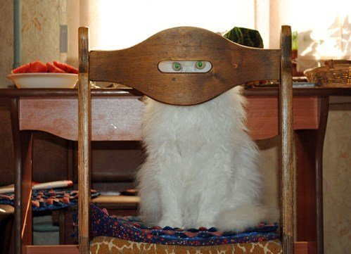 ninja-cat-training-day-two.jpeg