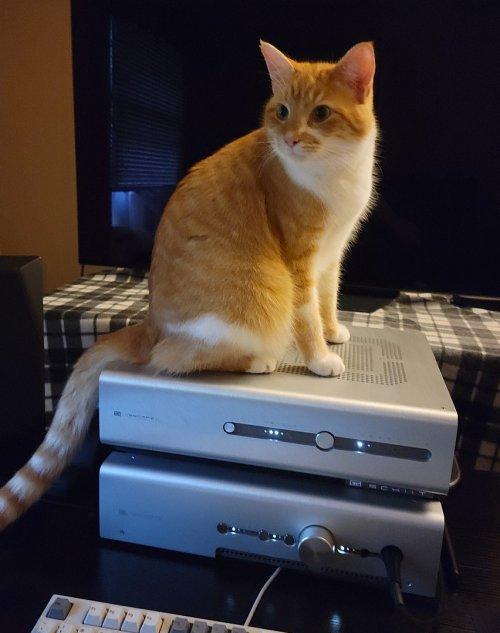 Cat on Schiit Stack.jpg