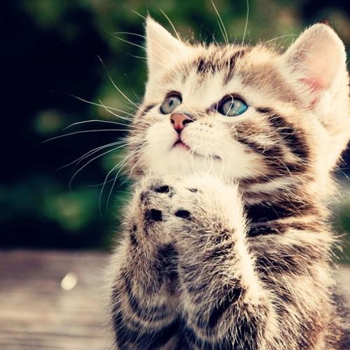 beggin-kitten.jpg