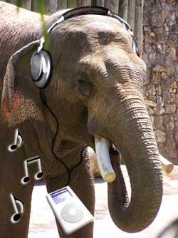 elephant_headphones.jpg