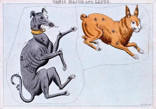 dogdays.adapt.768.1.jpg