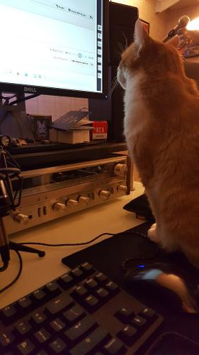 Fitz_loves_teh_internet.jpg