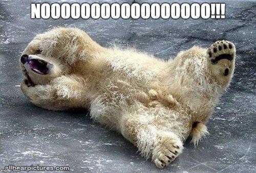 e095e45eb10c38229418a1a02bbc2585_nooooooo-bear-imgflip-nooooooo-meme_700-474.jpeg