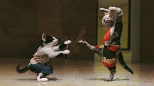cats ninja.jpg