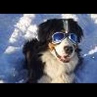 Advance Dog