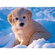 Snowpuppy77