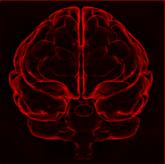 Cerebrum2045
