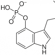 PsilocybinCube