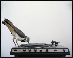 recordHome.jpg