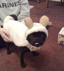 sheep-dog-costume.jpg