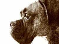 dog1 (200x150).jpg