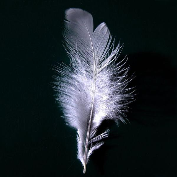 feather - square.jpg