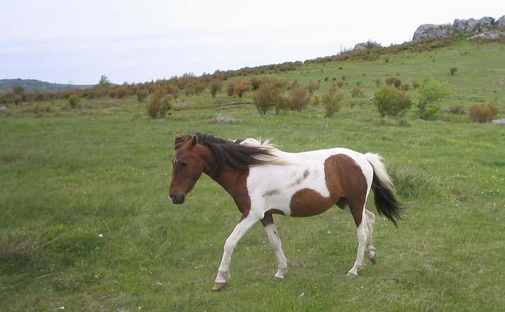 ponies02.jpg