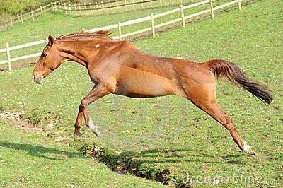 a-horse-running-in-field-thumb14696991.jpg