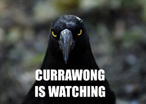 Currawong is watching.jpeg