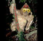 Sloth-Playing-a-Saxophone-----63977.jpg