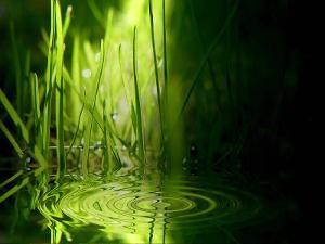 vista-wallpaper-grass-ripples.jpg