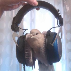 Skittles Headphones 1 Avatar.png