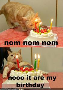 funny-pictures-cat-wants-his-birthday-cake.jpg