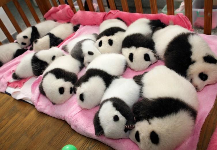 new panda crop.jpg