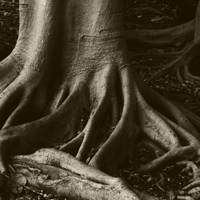Black-and-White-tree-roots.png
