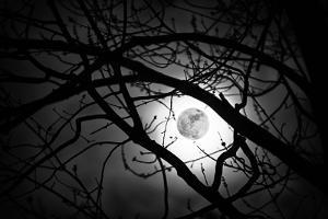 Perigee Moon photo I shot.