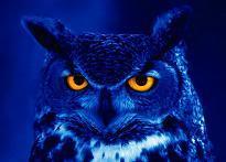 owl_what.jpg