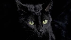 Black_Cat_HD_Wallpaper_1366x768_3306.jpg