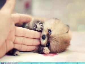 ,,animal,cute,animals,puppy-1c40dac677eb24594a9b0583a719624e_h.jpg