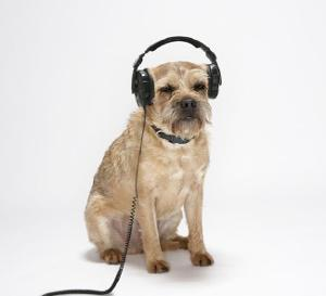 dog wearing a headphone