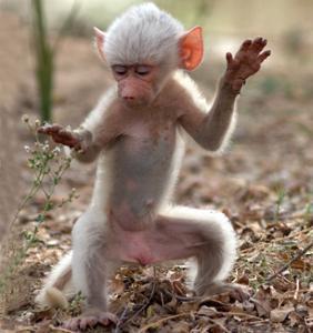 dancingmonkey