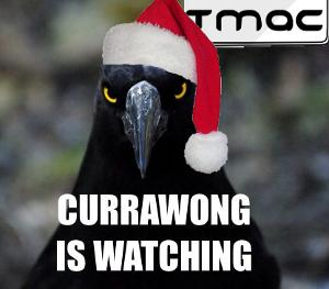 Currawong is watching