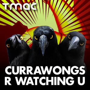 3 currawongs r watching