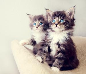 cute_kittens-2560x1600.jpg