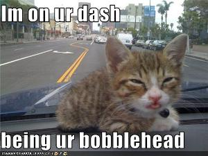 funny-pictures-kitten-is-bobblehead.jpg