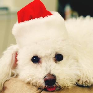 Santa Snoopy copy.jpg