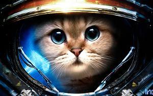 starcraft-marine-cat-800.jpg